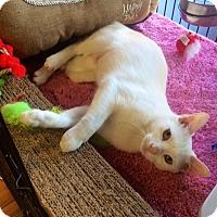 Adopt A Pet :: Daisy - Bear, DE