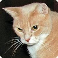 Adopt A Pet :: Pepita - Medford, MA