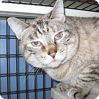 Adopt A Pet :: Juna - Colmar, PA
