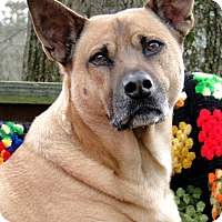 Adopt A Pet :: Stanley - Heart of Gold! - Zebulon, NC