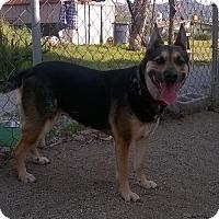 Adopt A Pet :: Layla - Campbell, CA