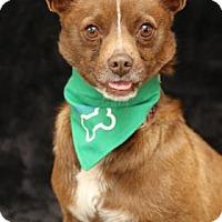 Adopt A Pet :: Reeses - Yucaipa, CA