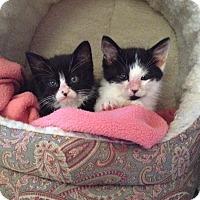 Adopt A Pet :: Bean - Santa Rosa, CA