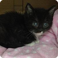 Adopt A Pet :: MICKEY - Lakewood, CA