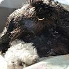 Adopt A Pet :: Liam