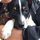 Adopt A Pet :: Montana (11 lb) Video!