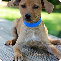Adopt A Pet :: Monkey - Waldorf, MD