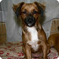 Adopt A Pet :: EMBER-16 Hollywood FL - Lithia, FL