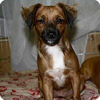 Adopt A Pet :: EMBER-16 - Lithia, FL