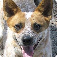 Adopt A Pet :: Trixie - Bradenton, FL