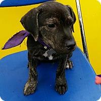 Adopt A Pet :: Basil - Detroit, MI