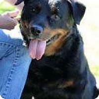 Adopt A Pet :: Bruno - Rexford, NY