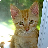 Adopt A Pet :: Fitz - Durham, NC