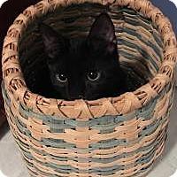 Adopt A Pet :: Flipper - Franklin, WV