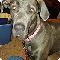 Adopt A Pet :: Bella - Oswego, IL