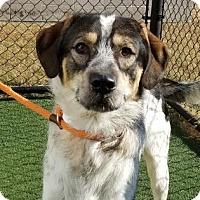 Adopt A Pet :: Elijah - Chesapeake, VA