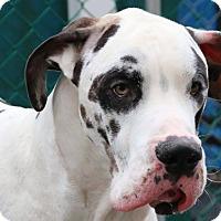 Adopt A Pet :: Apollo - Ottawa, ON