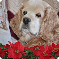 Adopt A Pet :: Cooper 8yr Adopted - Mentor, OH