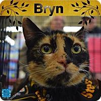 Adopt A Pet :: Bryn - Washington, PA