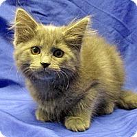 Adopt A Pet :: 16-c11-003 Krissy - Fayetteville, TN