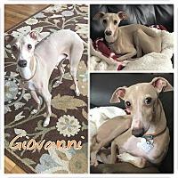 Adopt A Pet :: Giovanni - Garden City, MI