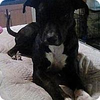 Adopt A Pet :: Natalie - Staunton, VA