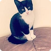 Adopt A Pet :: Hairy - Princeton, MN