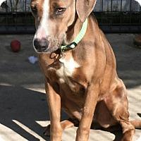 Adopt A Pet :: Mardi - Hanna City, IL