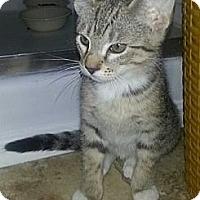 Adopt A Pet :: Modesto - Monroe, GA