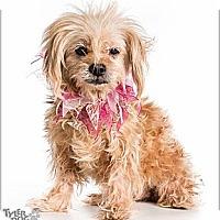 Adopt A Pet :: Aspen - Evans, CO