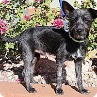 Adopt A Pet :: Lobito-Tao - Gilbert, AZ