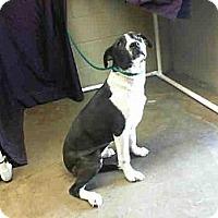 Adopt A Pet :: Kacie URGENT - San Diego, CA
