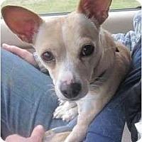Adopt A Pet :: Missy - Afton, TN