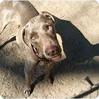 Adopt A Pet :: **ADOPTED** Staalie - Eustis, FL