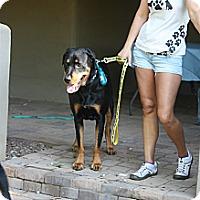 Adopt A Pet :: Olson - Gilbert, AZ