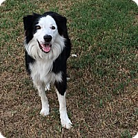 Adopt A Pet :: Raider - Palmetto, FL