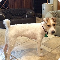 Adopt A Pet :: Twinkie In Longview - Dallas/Ft. Worth, TX