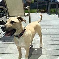 Adopt A Pet :: Sami - Marlton, NJ