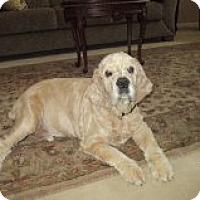 Adopt A Pet :: Boo Boo - Campbell, CA