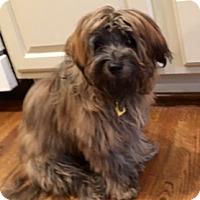 Adopt A Pet :: Madison - Atlanta, GA