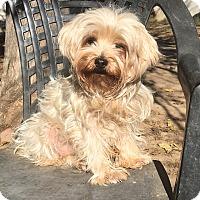 Adopt A Pet :: Tootie - Van Nuys, CA