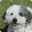 Adopt A Pet :: Zither