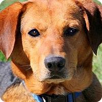 Adopt A Pet :: HERO(PRISON TRAINING STUDENT! - Wakefield, RI