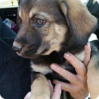 Adopt A Pet :: Jodie - Tucson, AZ