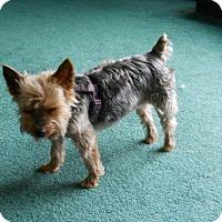 Adopt A Pet :: Charlie 3223 - Toronto, ON