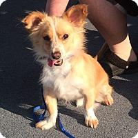 Adopt A Pet :: Cade (ETAA) - Spring Valley, NY