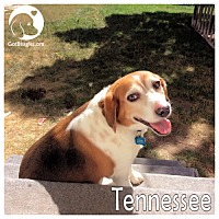 Adopt A Pet :: Tennessee - Pittsburgh, PA