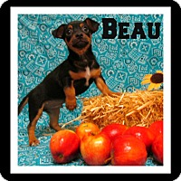 Adopt A Pet :: BEAU - Tracy, CA