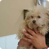 Adopt A Pet :: Harley - Thousand Oaks, CA