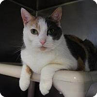 Adopt A Pet :: Della - New Milford, CT